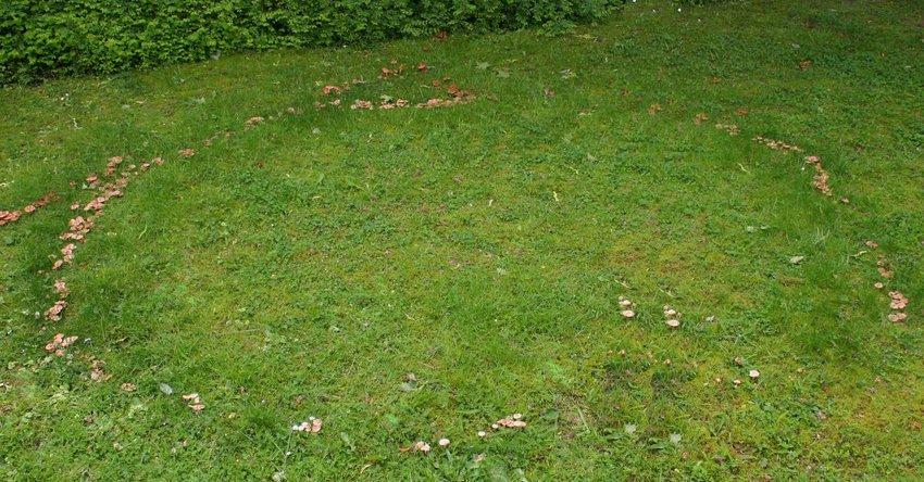 Halme frühjahr gelbe rasen Rasen reparieren: