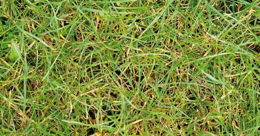 Rasen gelbe halme frühjahr
