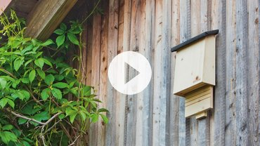 neudorff videos podcasts. Black Bedroom Furniture Sets. Home Design Ideas