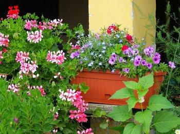 neudorff urban gardening was ist das. Black Bedroom Furniture Sets. Home Design Ideas