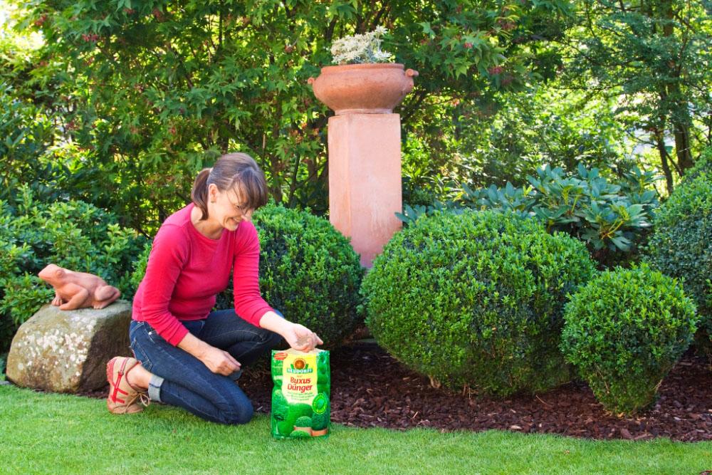 Düngen Sie Ihre Buchsbäume In Kübeln Jetzt Mit Azet Buxus  U0026 IlexDünger. So  Versorgen Sie Die Pflanzen über Einen Längeren Zeitraum Mit Allen Nötigen  ...